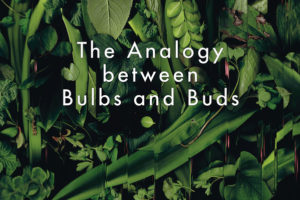 analogy-between-bulbs-and-buds