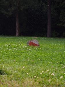 herbs_kraeuter-der-provence9